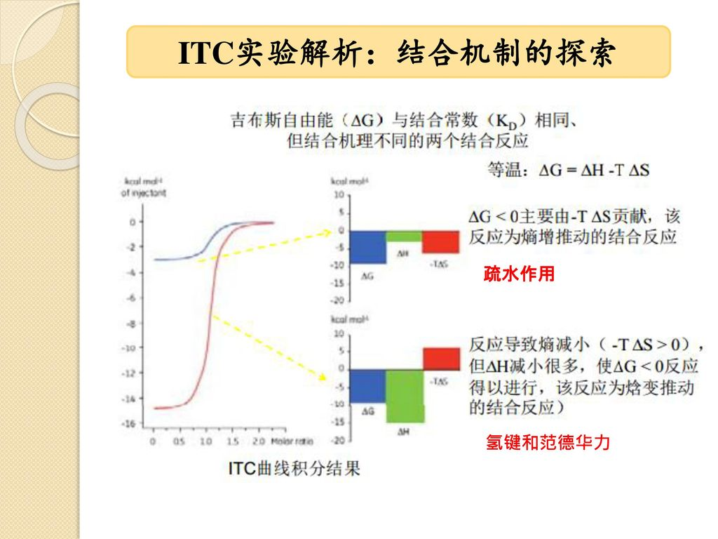 ITC实验解析:结合机制的探索 疏水作用 氢键和范德华力