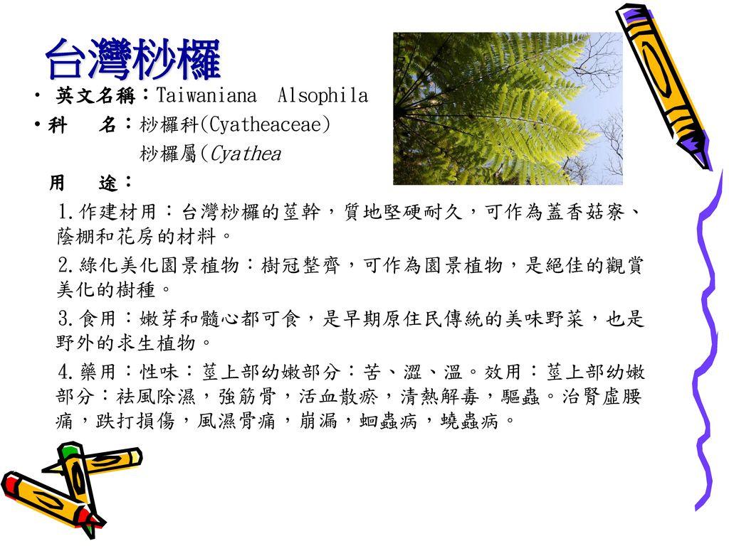 台灣桫欏 英文名稱:Taiwaniana Alsophila ‧科 名:桫欏科(Cyatheaceae) 桫欏屬(Cyathea 用 途: