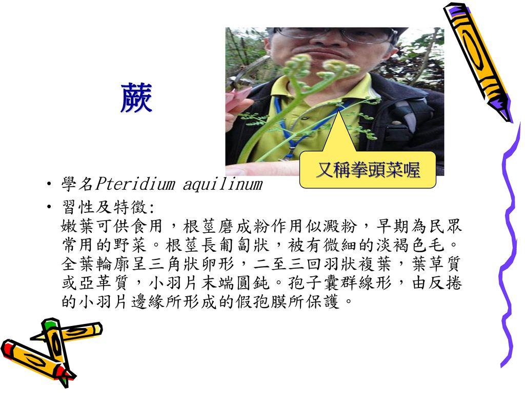 蕨 又稱拳頭菜喔 學名Pteridium aquilinum
