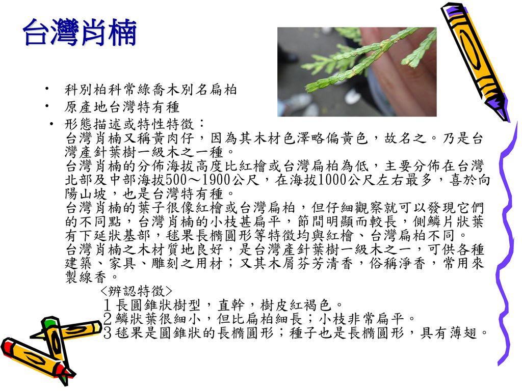 台灣肖楠 科別柏科常綠喬木別名扁柏 原產地台灣特有種