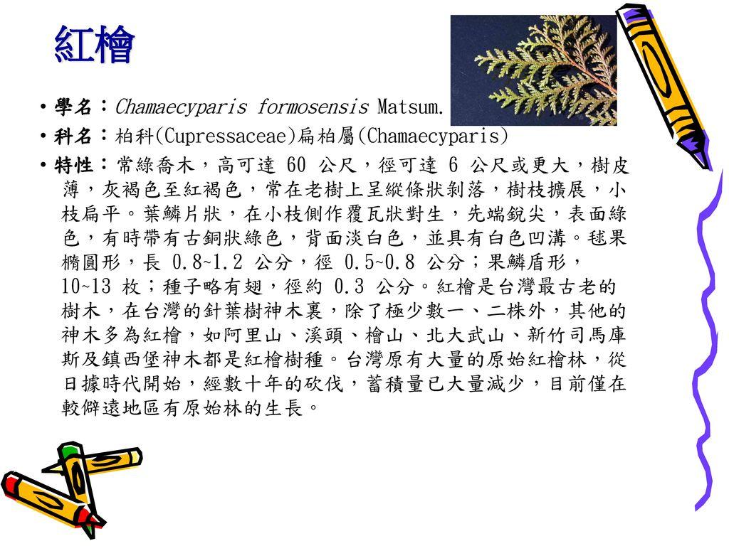 紅檜 ‧學名:Chamaecyparis formosensis Matsum.