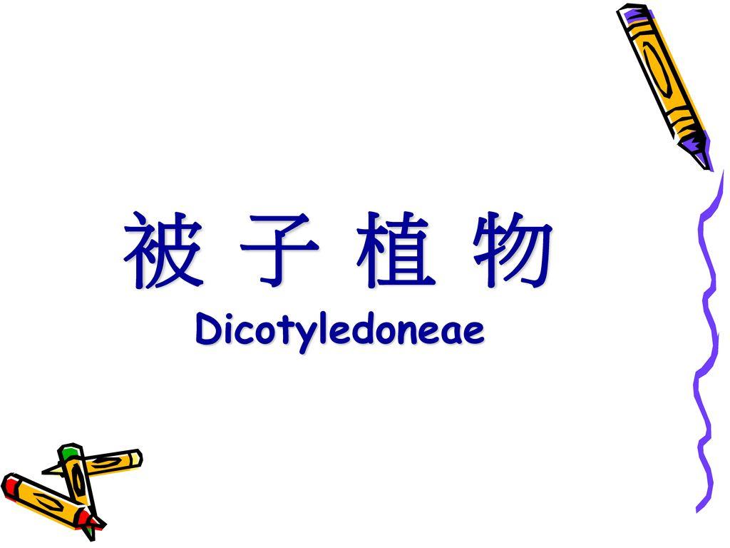 被 子 植 物 Dicotyledoneae