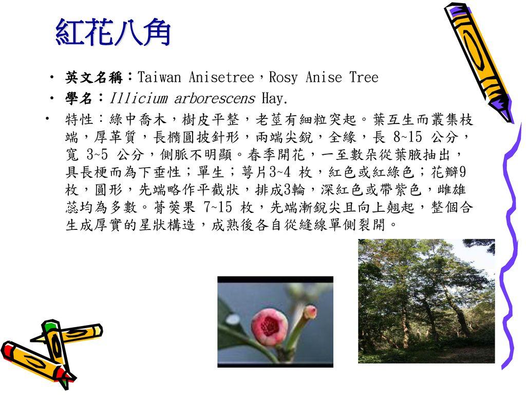 紅花八角 英文名稱:Taiwan Anisetree,Rosy Anise Tree