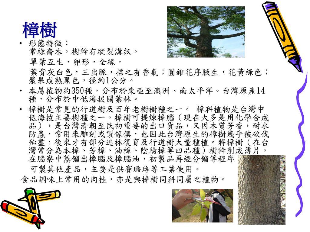 樟樹 形態特徵: 常綠喬木,樹幹有縱裂溝紋。 單葉互生,卵形,全緣,