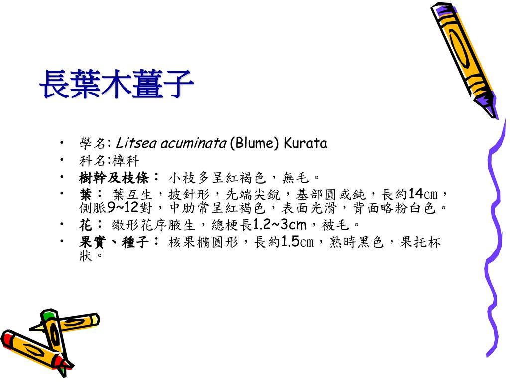 長葉木薑子 學名: Litsea acuminata (Blume) Kurata 科名:樟科 樹幹及枝條: 小枝多呈紅褐色,無毛。