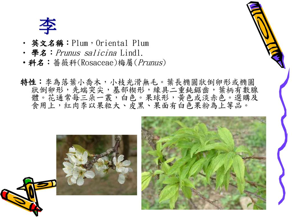 李 英文名稱:Plum,Oriental Plum 學名:Prunus salicina Lindl.