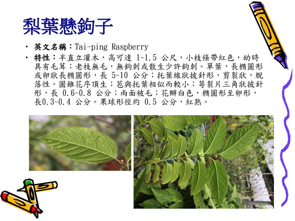梨葉懸鉤子 英文名稱:Tai-ping Raspberry