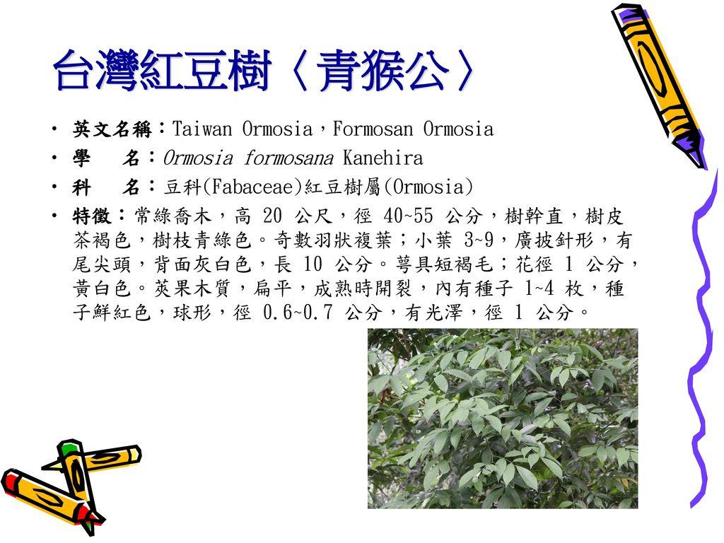 台灣紅豆樹〈青猴公〉 英文名稱:Taiwan Ormosia,Formosan Ormosia