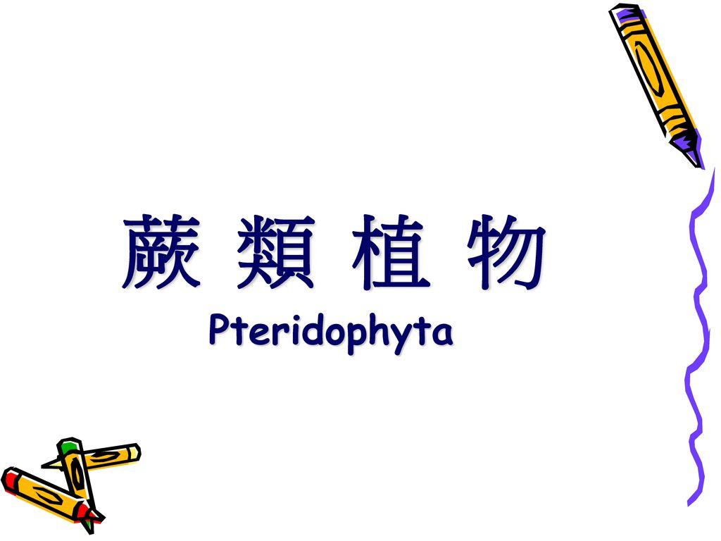 蕨 類 植 物 Pteridophyta