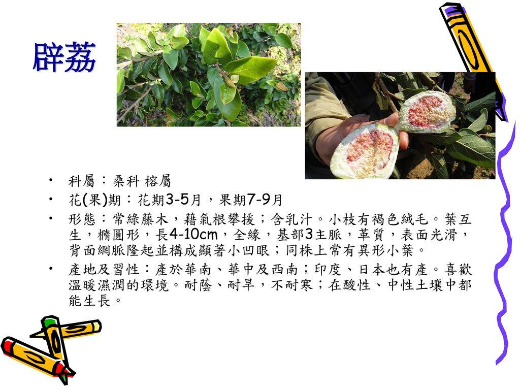 辟荔 科屬:桑科 榕屬 花(果)期:花期3-5月,果期7-9月