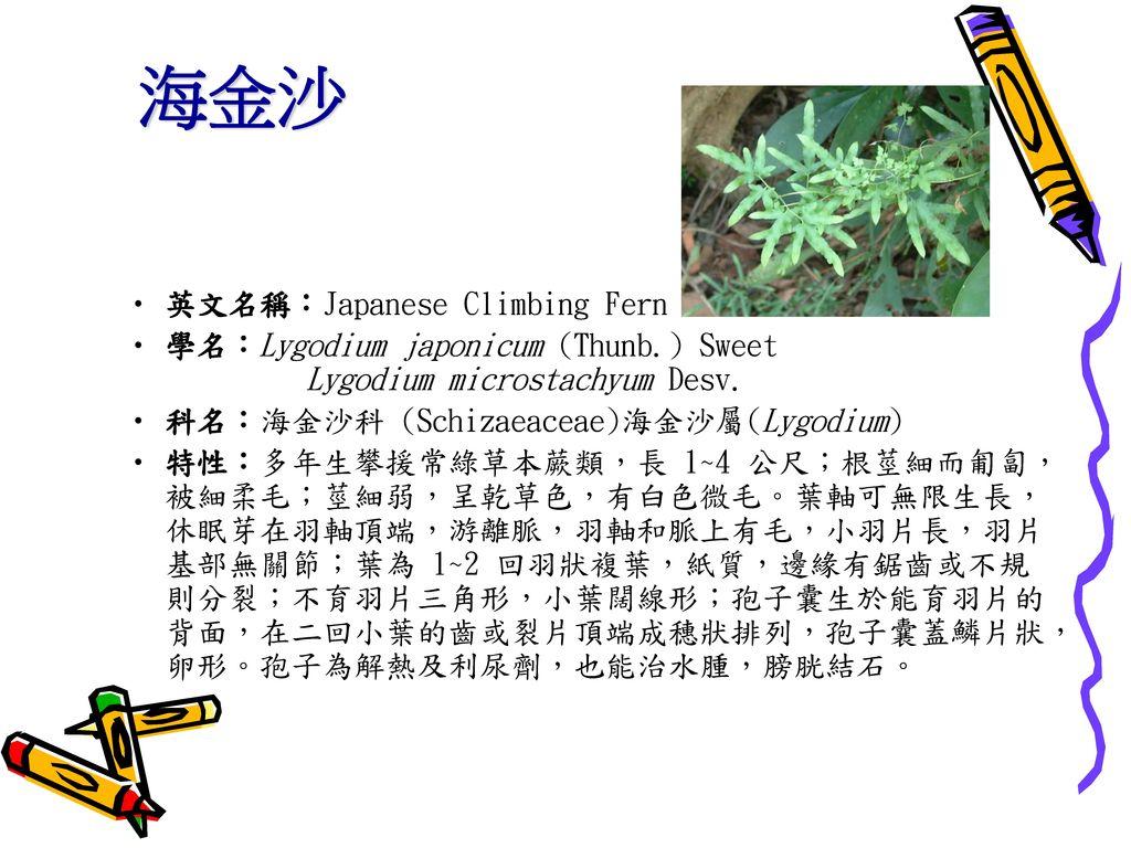 海金沙 英文名稱:Japanese Climbing Fern