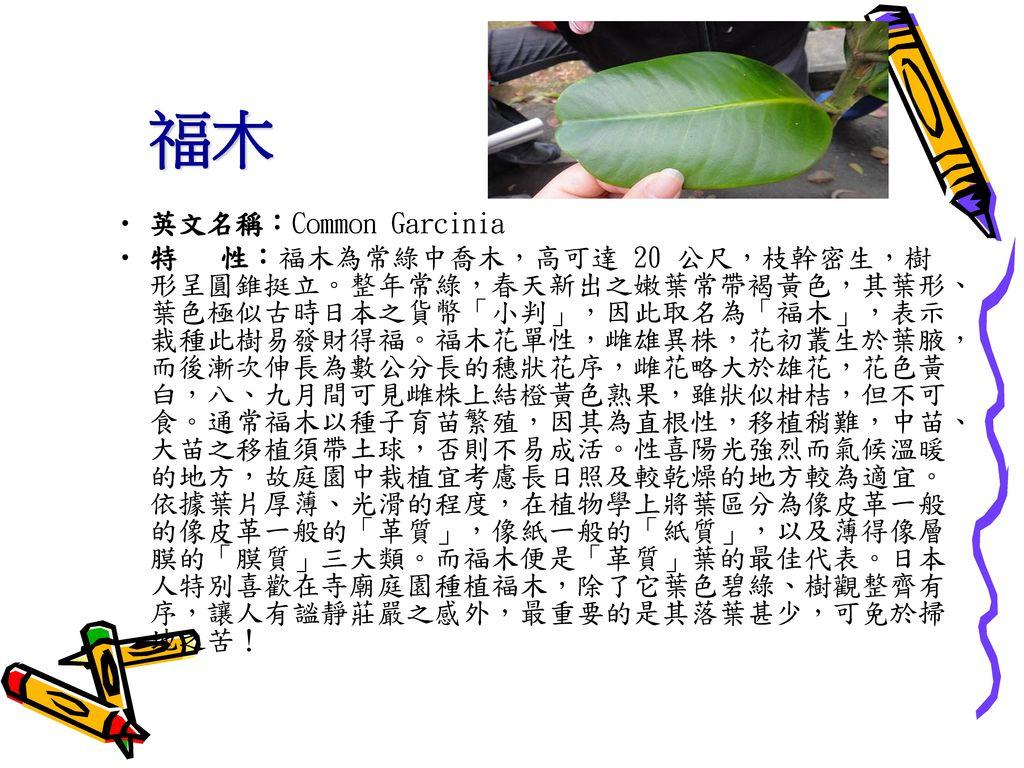 福木 英文名稱:Common Garcinia