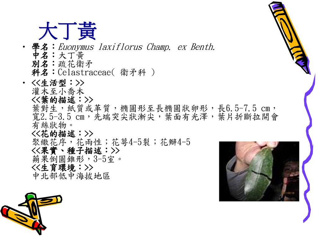 大丁黃 學名:Euonymus laxiflorus Champ. ex Benth. 中名:大丁黃 別名:疏花衛矛 科名:Celastraceae( 衛矛科 )