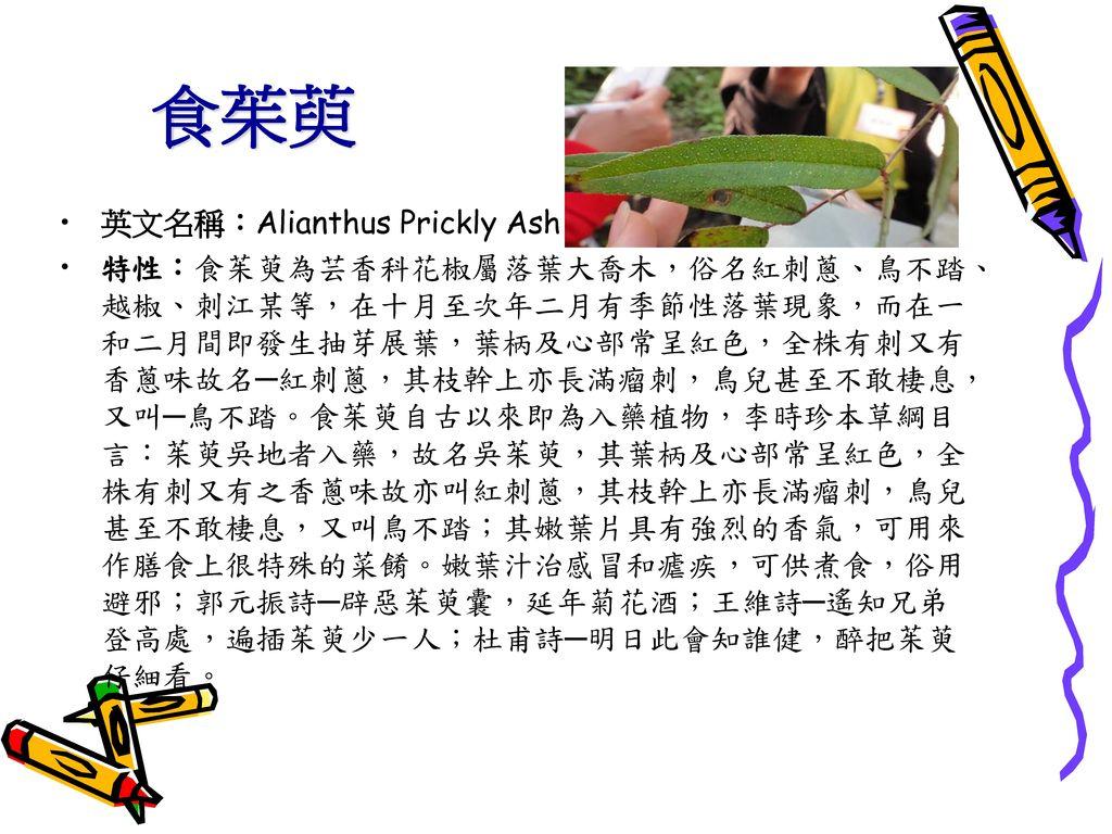 食茱萸 英文名稱:Alianthus Prickly Ash