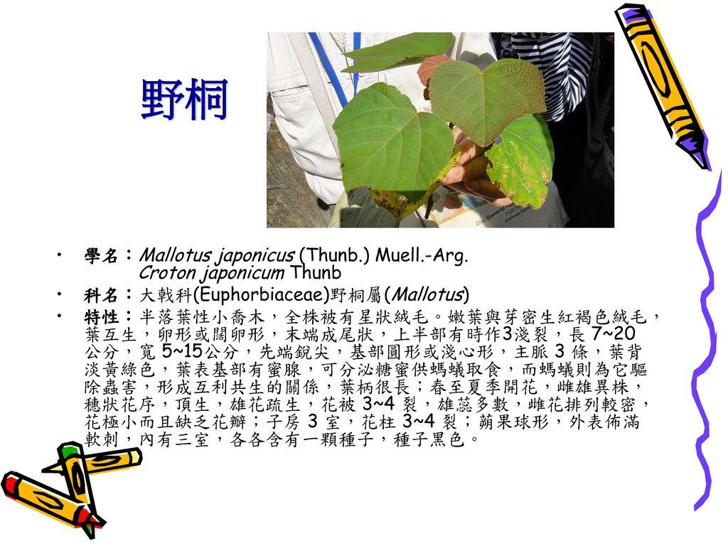 野桐 學名:Mallotus japonicus (Thunb.) Muell.-Arg. Croton japonicum Thunb