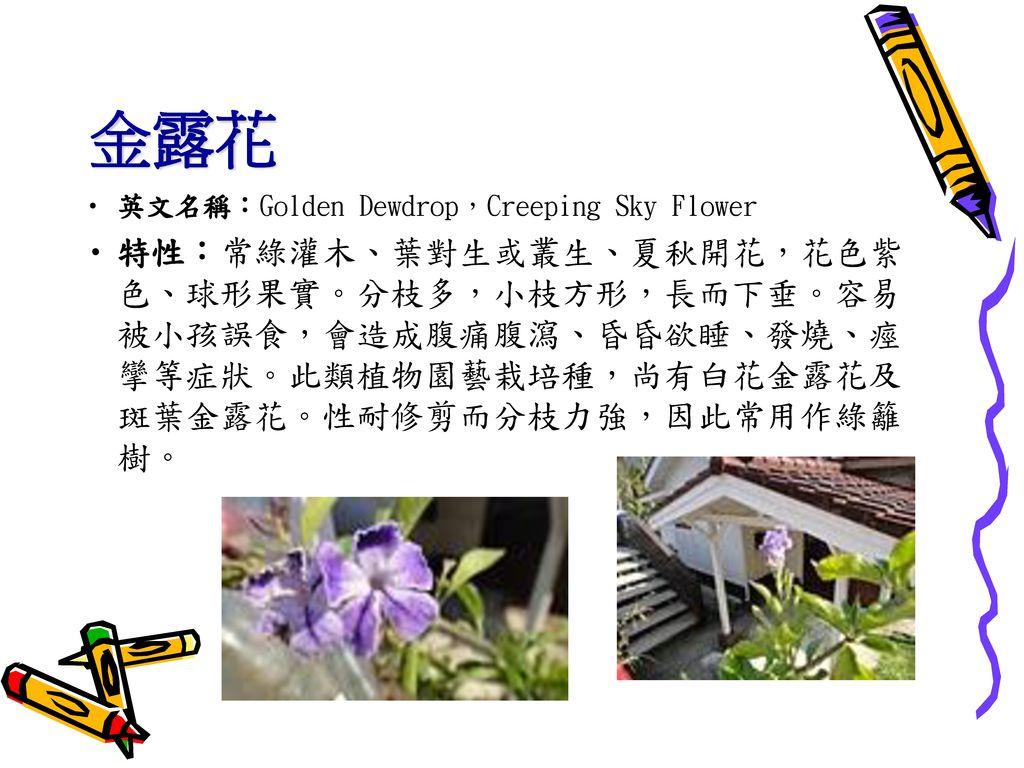 金露花 英文名稱:Golden Dewdrop,Creeping Sky Flower.