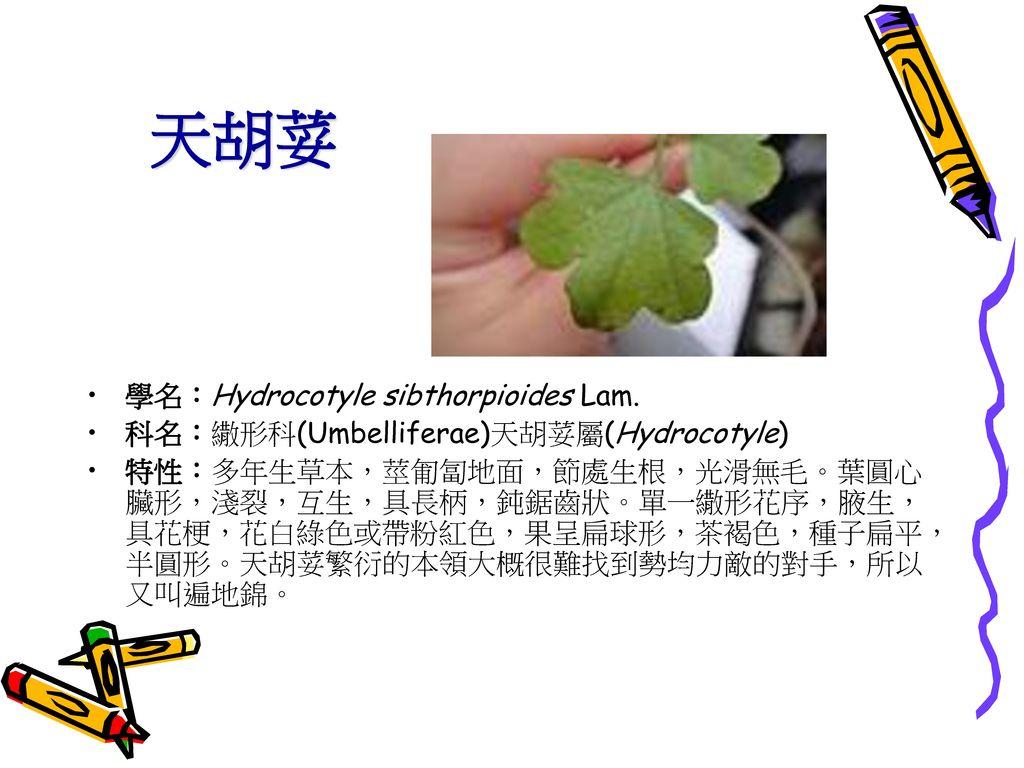 天胡荽 學名:Hydrocotyle sibthorpioides Lam.