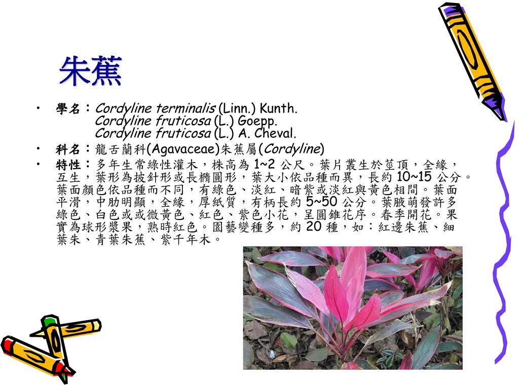 朱蕉 學名:Cordyline terminalis (Linn.) Kunth. Cordyline fruticosa (L.) Goepp. Cordyline fruticosa (L.) A. Cheval.