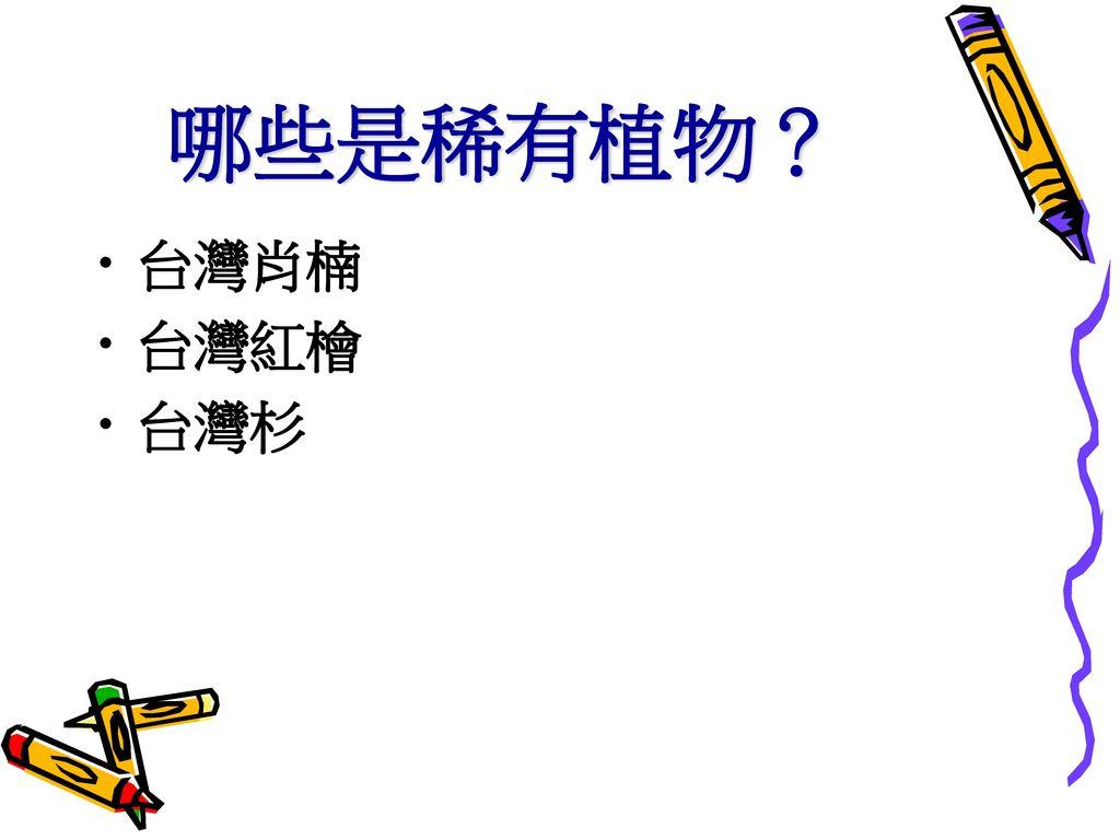 哪些是稀有植物? 台灣肖楠 台灣紅檜 台灣杉