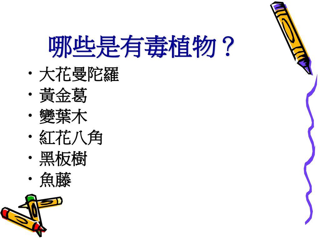 哪些是有毒植物? 大花曼陀羅 黃金葛 變葉木 紅花八角 黑板樹 魚藤