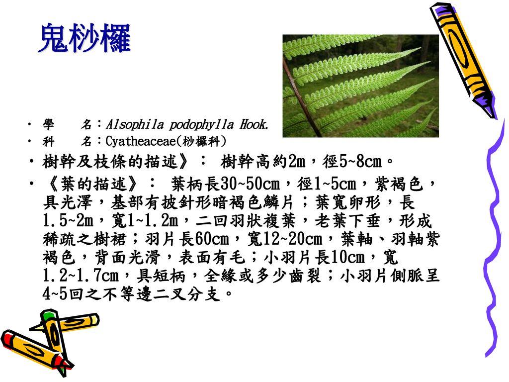 鬼桫欏 樹幹及枝條的描述》: 樹幹高約2m,徑5~8cm。