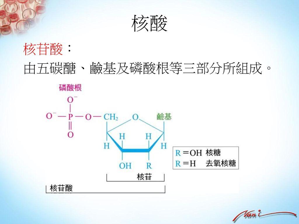 油脂 皂化反應: 通式: 油脂 甘油+長鏈脂肪酸鹼金 屬鹽(肥皂)。