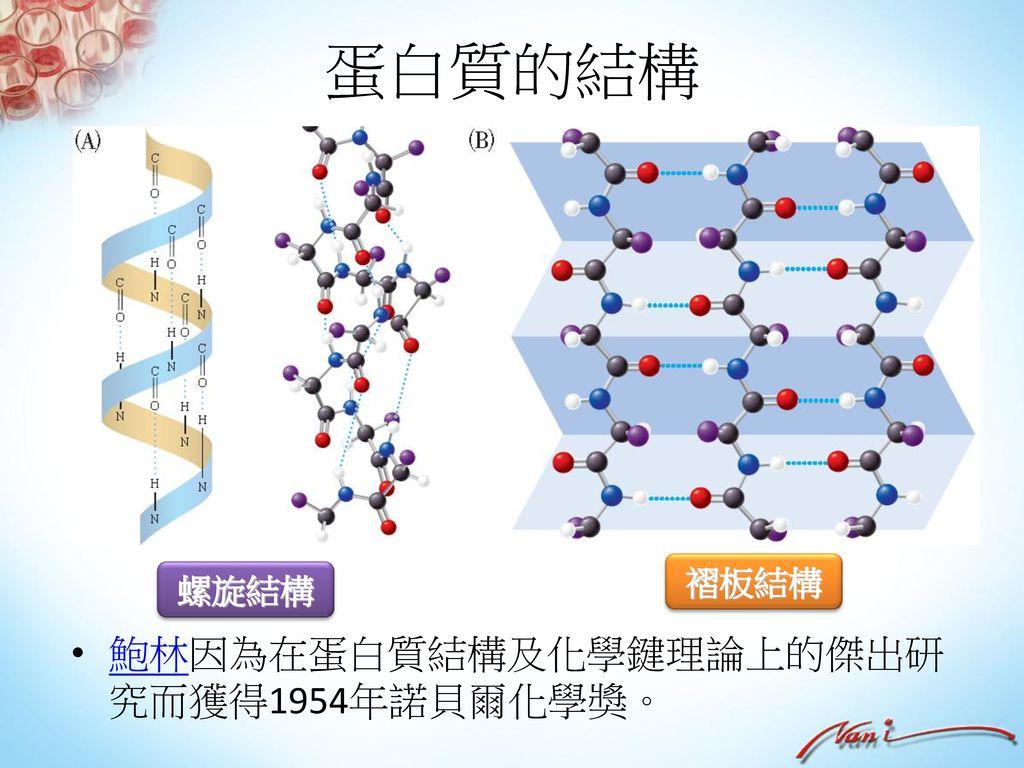 胺基酸 胺基酸:分子中同時具有胺基(-NH2)及羧基(-COOH)的化合物。天然的胺基酸約有20種。最簡單的胺基酸為甘胺酸。 胺基 胺基 R