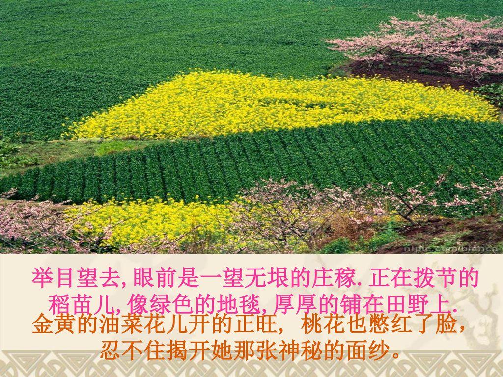 举目望去,眼前是一望无垠的庄稼.正在拨节的稻苗儿,像绿色的地毯,厚厚的铺在田野上.