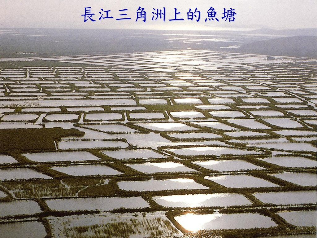 長江三角洲上的魚塘