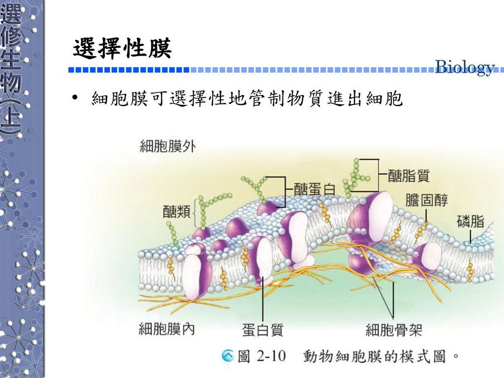 選擇性膜 細胞膜可選擇性地管制物質進出細胞