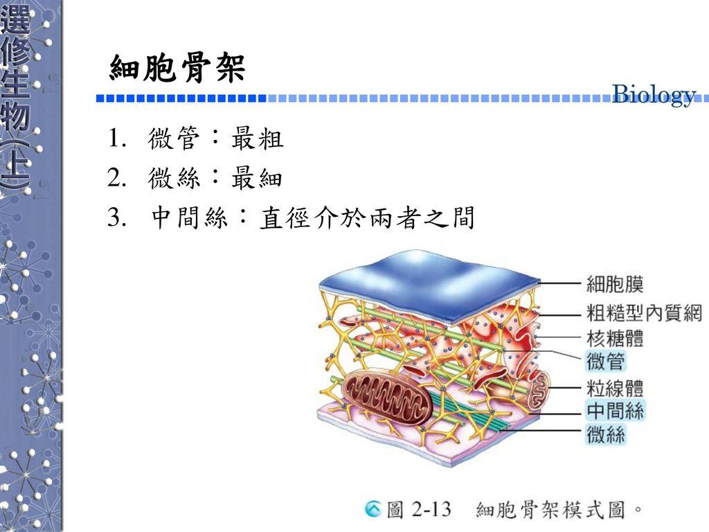 細胞骨架 微管:最粗 微絲:最細 中間絲:直徑介於兩者之間