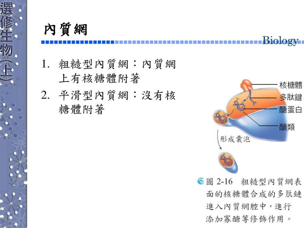 內質網 粗糙型內質網:內質網上有核糖體附著 平滑型內質網:沒有核糖體附著