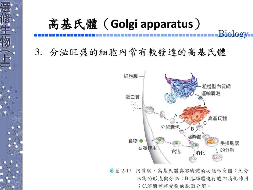 高基氏體(Golgi apparatus)
