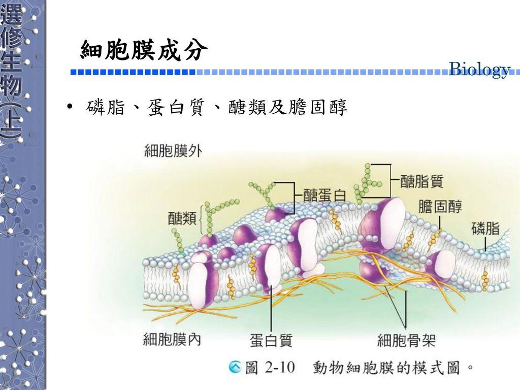 細胞膜成分 磷脂、蛋白質、醣類及膽固醇