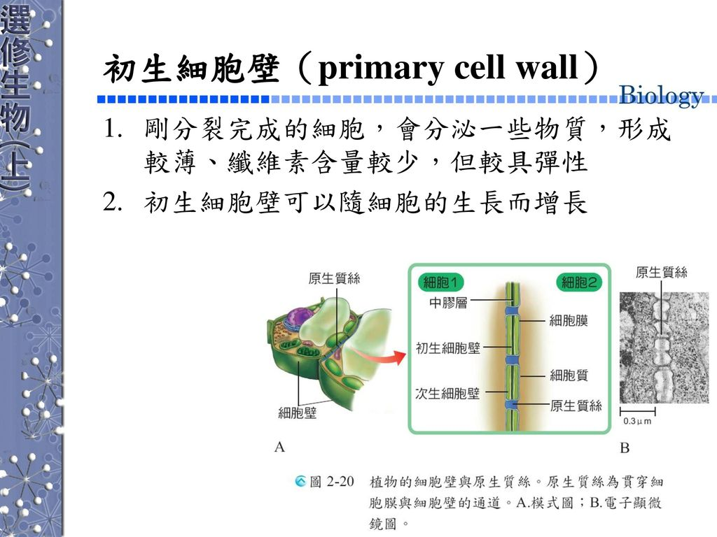 初生細胞壁(primary cell wall)