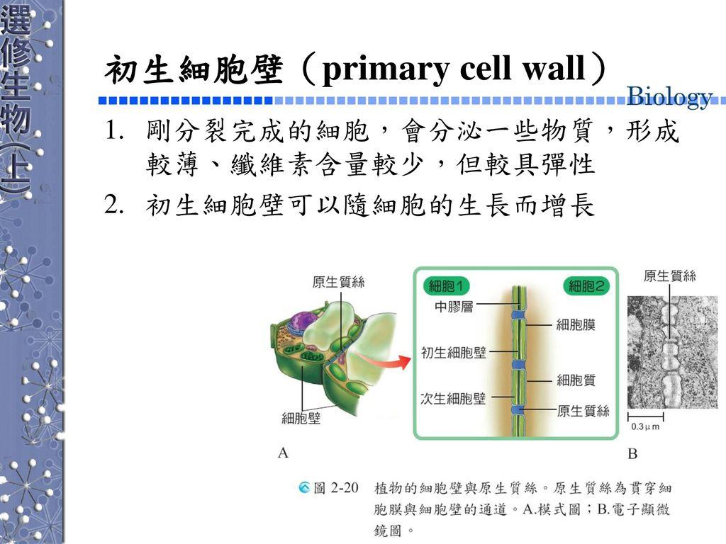 初生細胞壁(primary cell wall)