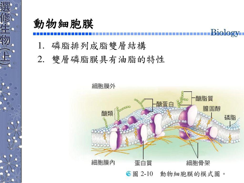 動物細胞膜 磷脂排列成脂雙層結構 雙層磷脂膜具有油脂的特性