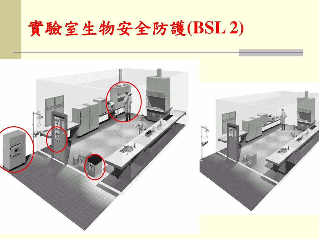 實驗室生物安全防護(BSL 2)