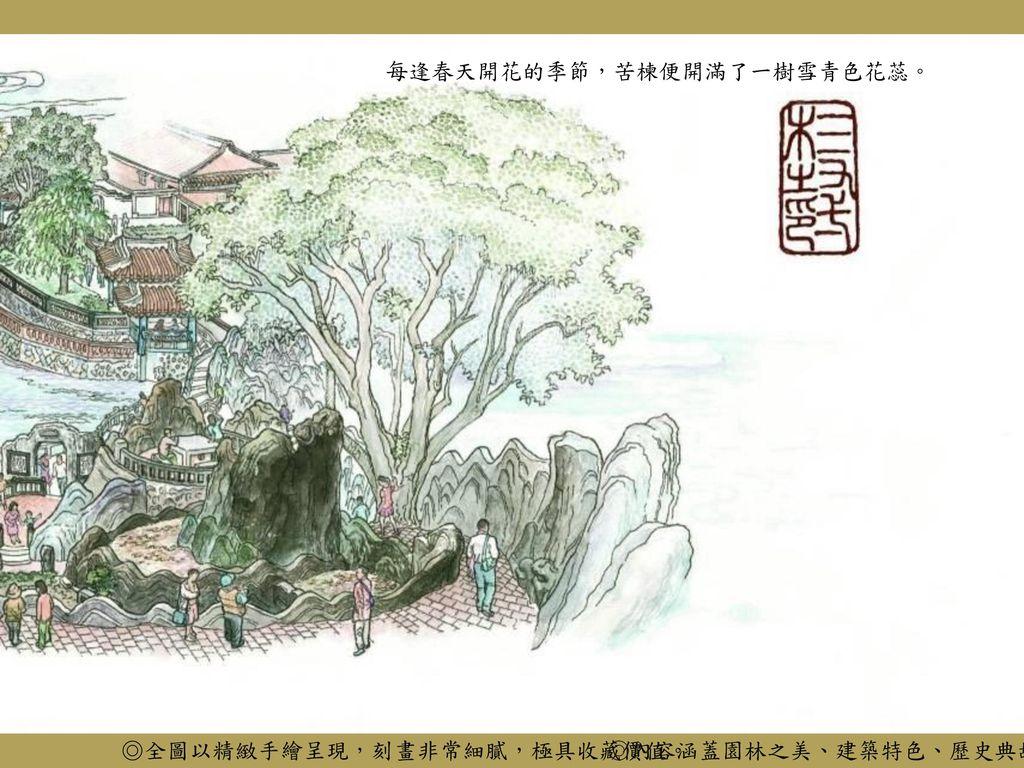 每逢春天開花的季節,苦楝便開滿了一樹雪青色花蕊。