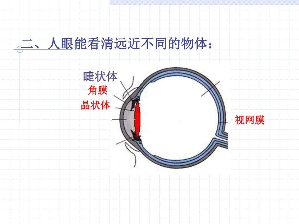 二、人眼能看清远近不同的物体: 睫状体 角膜 晶状体 视网膜
