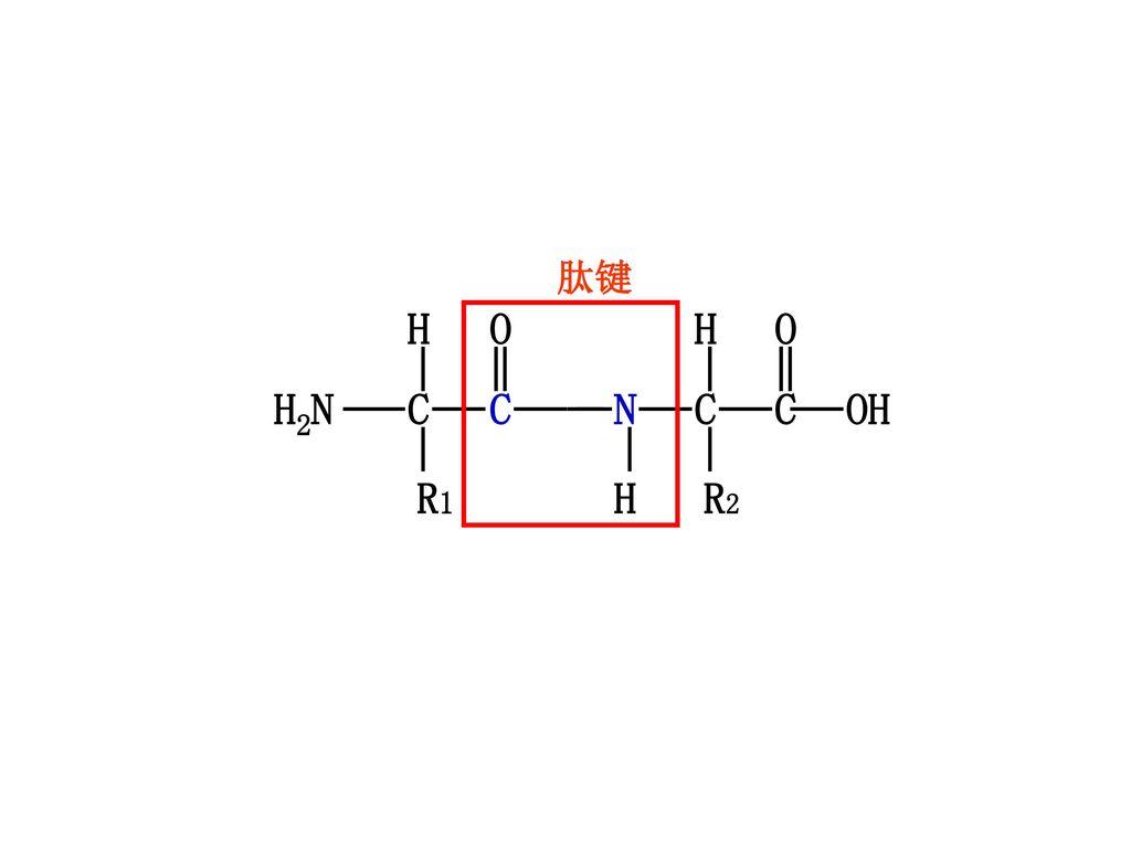 α-羧基α-碳原子氢原子α-氨基侧链基团α-氨基酸基本结构通式