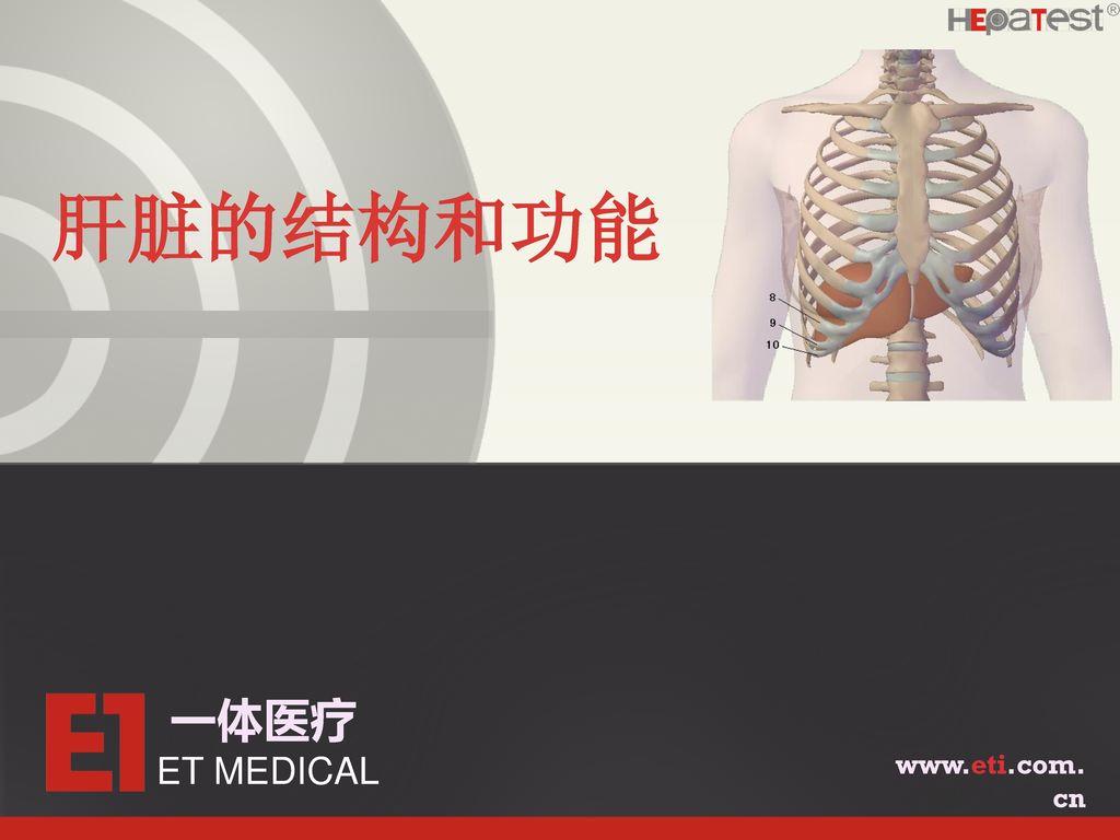 肝脏的结构和功能 一体医疗 ET MEDICAL www.eti.com.cn