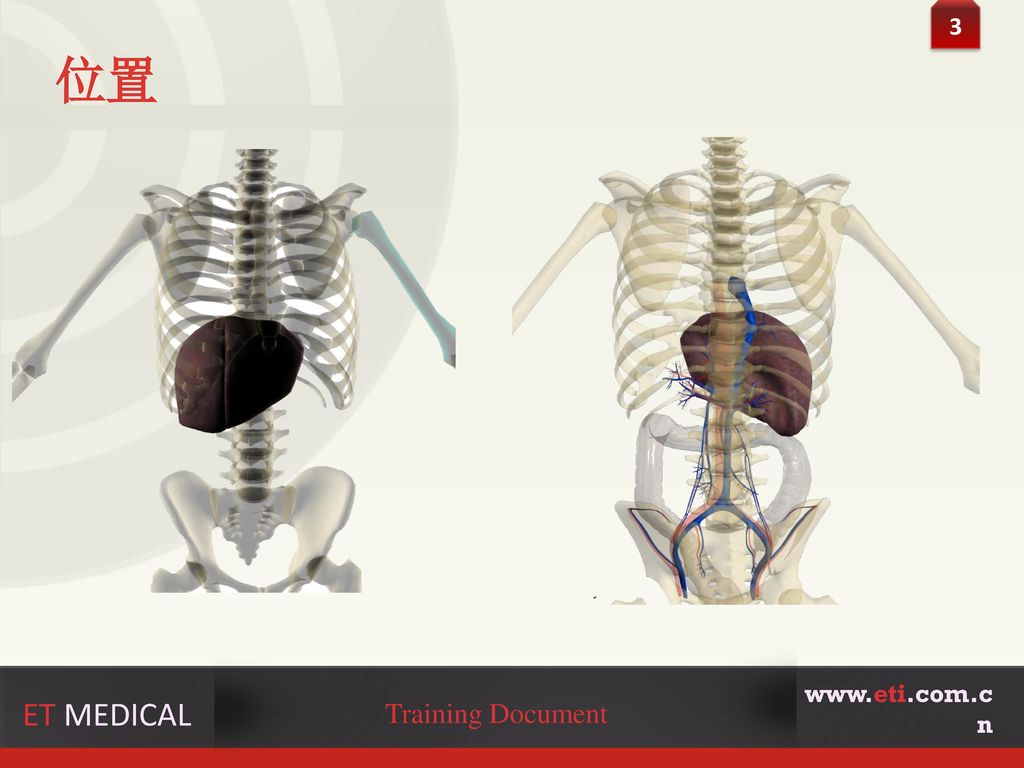 3 位置 www.eti.com.cn ET MEDICAL Training Document