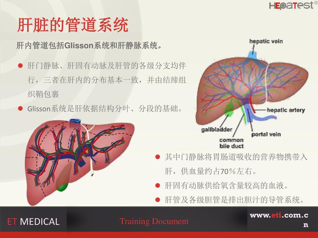 肝脏的管道系统 ET MEDICAL Training Document 肝内管道包括Glisson系统和肝静脉系统。