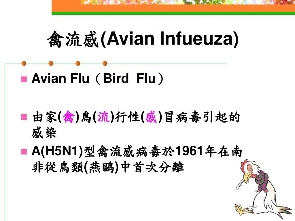 禽流感(Avian Infueuza) Avian Flu(Bird Flu) 由家(禽)鳥(流)行性(感)冒病毒引起的感染