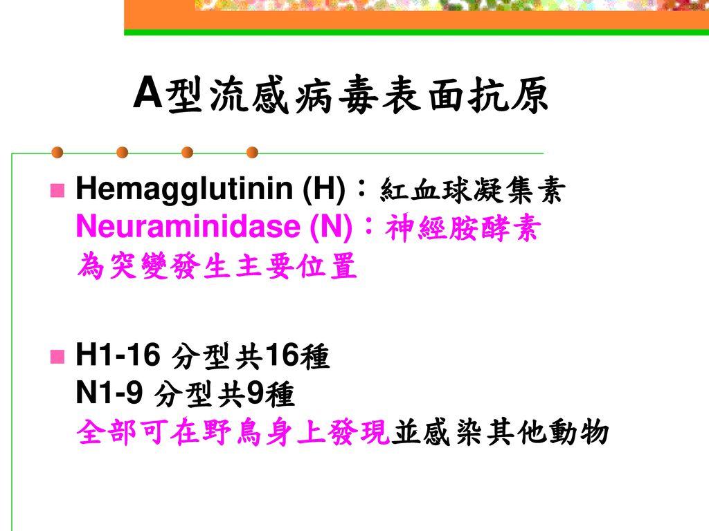 A型流感病毒表面抗原 Hemagglutinin (H):紅血球凝集素 Neuraminidase (N):神經胺酵素 為突變發生主要位置