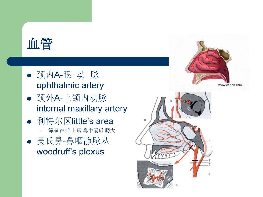 A Ophthalmic Artery A Internal Maxillary Artery