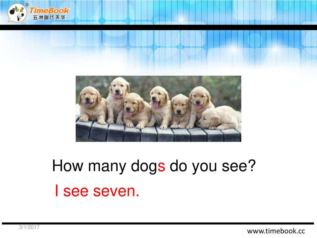 How many dogs do you see I see seven. 3/1/2017