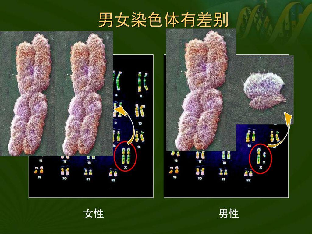 第1节 生物的遗传(3).