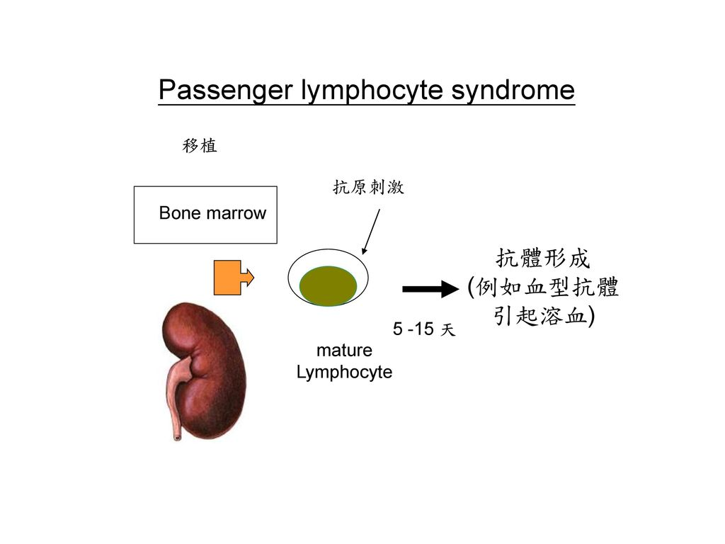 Passenger lymphocyte syndrome
